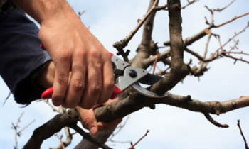 Tree Pruning in Allen TX Tree Pruning Services in Allen TX Quality Tree Pruning in Allen TX