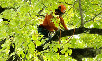 Tree Trimming in Allen TX Tree Trimming Services in Allen TX Tree Trimming Professionals in Allen TX Tree Services in Allen TX Tree Trimming Estimates in Allen TX Tree Trimming Quotes in Allen TX